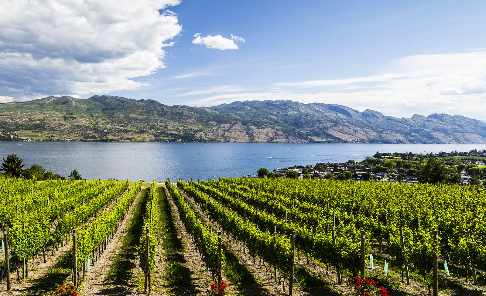 West Kelowna wine country